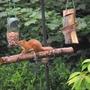 Ginger at feeder
