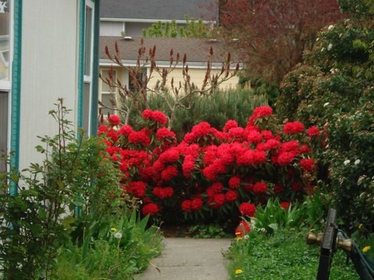 ENTRANCE TO HOUSE ~ LOVE THAT RHODIE