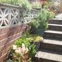 Our tubs on the steps, whilst Joy cleaned to lower patio.