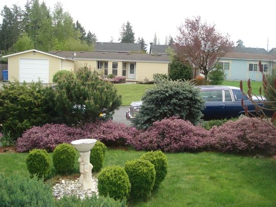 HEATHER ACROSS THE FRONT YARD