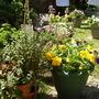 Garden_15th_may_2008_014
