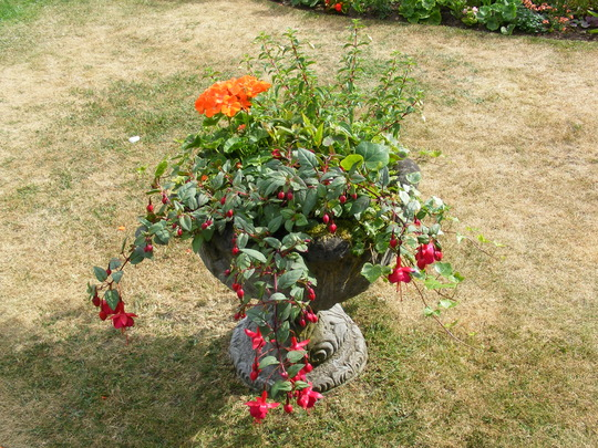 back garden 10 july 2010