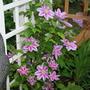 2010_Garden_028.jpg