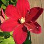 2010_Garden_034.jpg