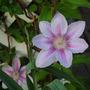 2010_Garden_036.jpg
