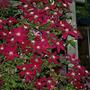 2010_Garden_040.jpg