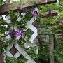 2010_Garden_048.jpg