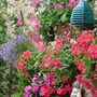 Wall baskets and tubs enjoying the rain...:o) (Impatiens)