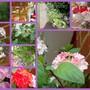 2010_07_10