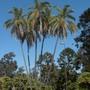 Balboa_park_07_09_10_031