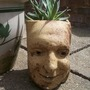 My cherished little garden fella (agave)