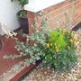 Front garden pot