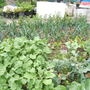 allotment_052.jpg