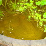 Desperate state of barrel pond