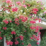 One of the many hanging baskets on display