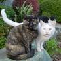 """Busaiku"" (left) ... for Linsuffolk and Fluffy (Selaginella tamariscina (Beauv.) Spring)"
