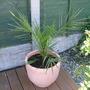 New_pots_001