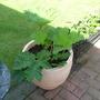 New_pots_002