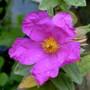 Garden16_007