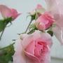 Garden_2010_so_far_017