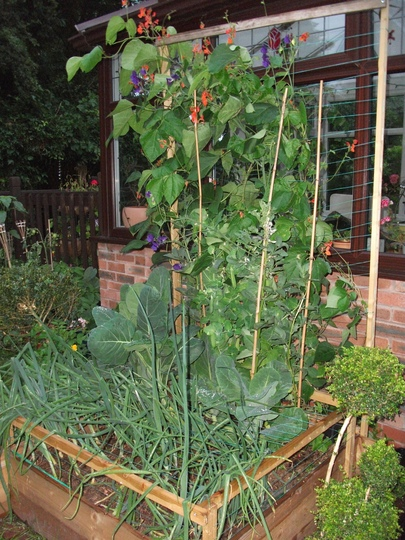 veg box 6 months on