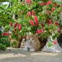 _cat_tale