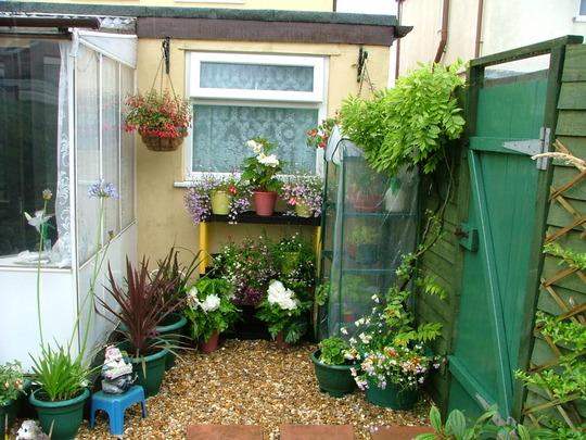 Little corner of my garden
