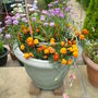 POT FULL OF FLOWERS  NOTICE THE MEXICAN HAT IN THE MIDDLE