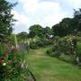 Arley - Rose Garden (June) II