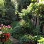 garden_july_10_031.jpg