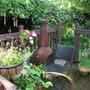 garden_july_10_037.jpg