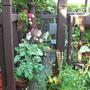 garden_july_10_036.jpg
