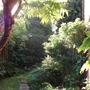 garden_july_10_030.jpg