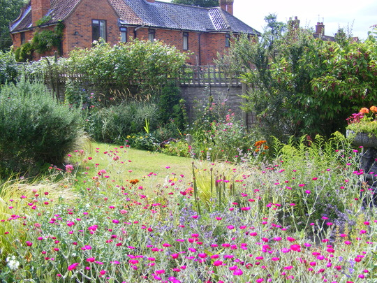 back garden 20 july 2010