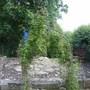 my old  raised garden