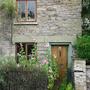 Hollyhocks in Hay  (Alcea rosea (Black Hollyhock))