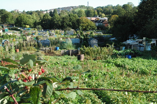 allotments in Bristol - October 2006