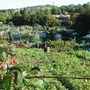 allotments in Bristol - October 2006
