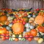 pumpkins from the garden of Tyntesfield Estate (near Bristol) - October 2006
