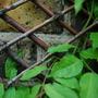 twigs woven as a screen in London