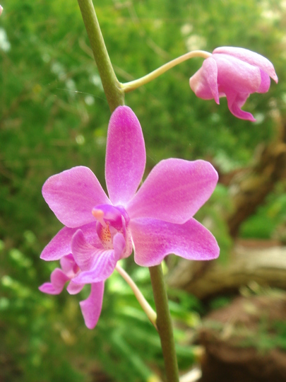 Orchid House - Palmitos Park - Gran Canaria - July 2010