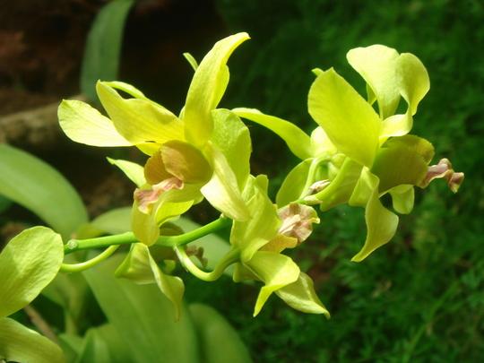 Orchid House - Palmitos Park - Gran Canaria 2010