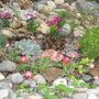 rockery plants 2