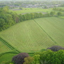 fields in Flanders seen from a hot air balloon  - May 2005