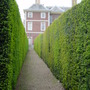 hedges in Syon Park, London  - May 2004