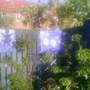 lucys work of art on garden fence