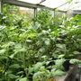 Greenhouse full