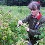 Hilda picking raspberries (in 1998!)