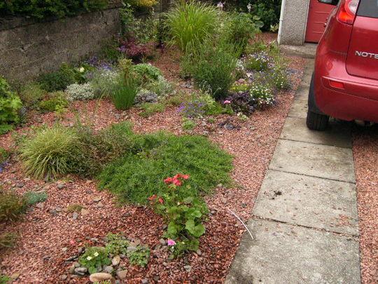 Bizzie Lizzie, petunia and pelargonium in gravel