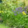 irises at my sister's garden in Antwerp